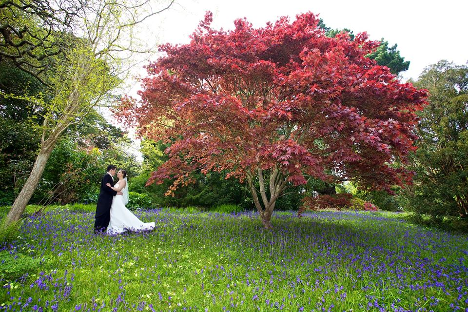 Wedding couple under red tree